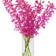 Purple Orchid In Vase Poster