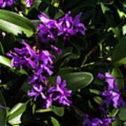 Purple Orchid Plant Poster