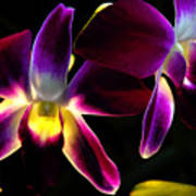 Purple Orchids 2 Backlit Poster