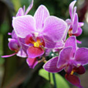 Purple Orchids 2 Poster