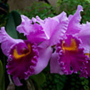 Purple Orchids Poster