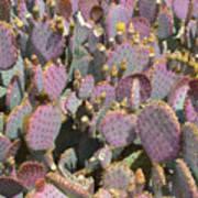 Purple Prickly Pear 3 Poster
