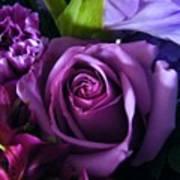 Purple Rose Poster