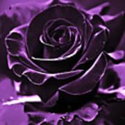 Purple Seduction Poster