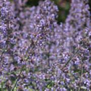 Purple Spikes Flora Impression 6.8.17  Poster