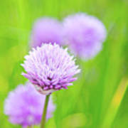 Purple Spring 11 Poster