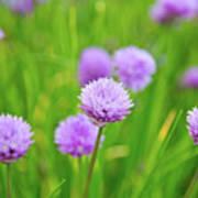 Purple Spring 14 Poster