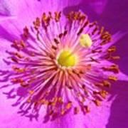 Purple Starburst Poster