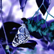 Purple Teal And A White Butterfly Poster