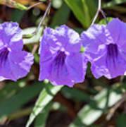 Purple Trio Poster