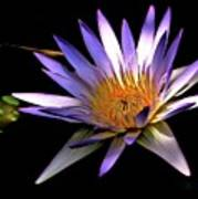 Purple Zen Poster