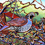Quail Poster by Nadi Spencer