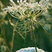 Queen Anne's Lace In Green Vertical Poster