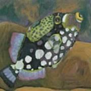 Queen Trigger Fish Poster