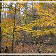 Quiet Autumn Morning Poster