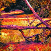 Quiet Meadow Poster