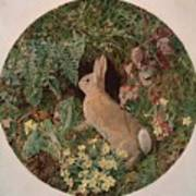 Rabbit Amid Ferns And Flowering Poster