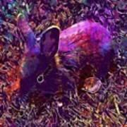 Rabbit Animal Baby Rabbit Bunny  Poster