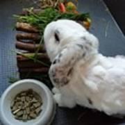 Rabbit Poster