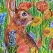 Rabbit In Meadow Poster