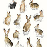Rabbits And Hares Poster