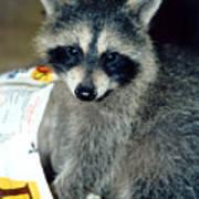 Raccoon1 Snack Bandit Poster