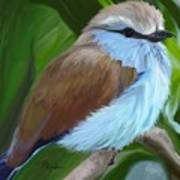 Racket-tailed Roller Poster