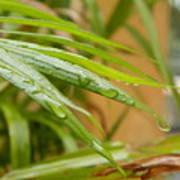 Rain Droppe1 Poster