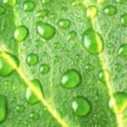Rain On A Leaf Poster