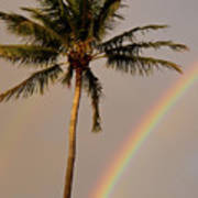 Rainbow And Palm Tree Poster
