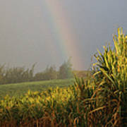 Rainbow Arching Into Field Behind Stream Poster