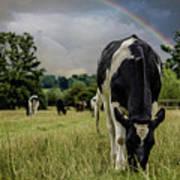 Rainbow Cow Poster