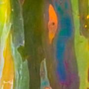 Rainbow Eucalyptus 9 Poster