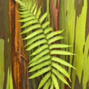 Rainbow Eucalyptus And Fern Poster