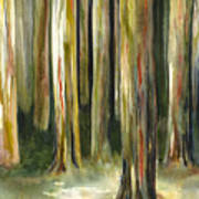 Rainbow Eucalyptus Forest Poster