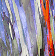 Rainbow Eucalyptus Tree Poster