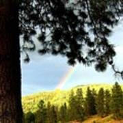 Rainbow In Pine Country Poster