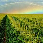 Rainbow Over The Cornfields Poster