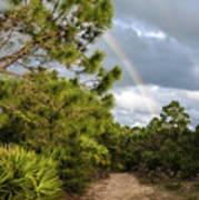Rainbow Path Poster