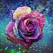 Rainbow Rose In The Rain Poster