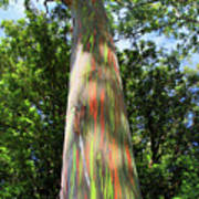 Rainbow Tree Poster by Pierre Leclerc Photography