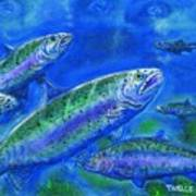 Rainbow Trout Swimming Poster