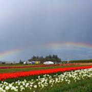 Rainbows At Tulip Festival Poster