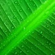 Raindrops ... Poster