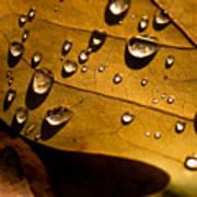 Raindrops On Leaf Poster