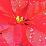 Raindrops On Red Poster