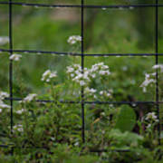 Raindrops On The Garden Fence Poster