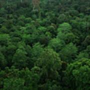 Rainforest Poster