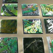 Rainforest Tile Prints Poster