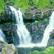 Rainforest Waterfalls Poster